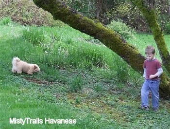 A boy is standing in a field in front of a mossy tree and to the left of him is this tan with white Havanese puppy who is sniffing the ground.