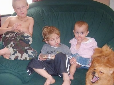 Three children are sitting in a green chair. Two of the children are looking forward. One child is looking at a tan Pomchi. A Pomchi is looking up and to the left.
