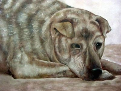 A portrait of a tan brindle Shar Pei/German Shepherd is laying down on a carpet. The dog has small rose ears, wrinkles on its head and a large body compared to the head.
