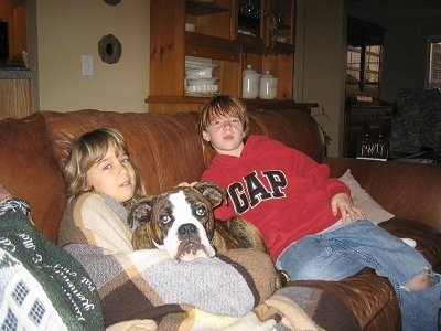 A brown brindle with white Olde English Bulldogge puppt is laying on a couch in the middle of two children. Behind it is a boy in a red Gap hoodie and blue jeans with a rip in the one knee and in front of it is a girl covered in a blanket.