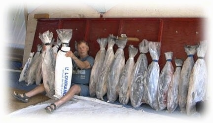 A man is sitting against a wooden board and on both his sides there is a line of Salmon fish packed in plastic bags with ice.