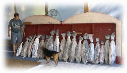 A line of Salmon packed in plastic and ice are sitting along a wooden board. A black and tan dog is standing in front of them and looking at a man at the end of the fish.