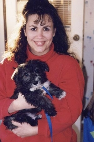 A brown haired lady in a red turtle neck shirt is holding a fluffy, black with white Scotchon puppy in her arms. The puppy is looking forward.