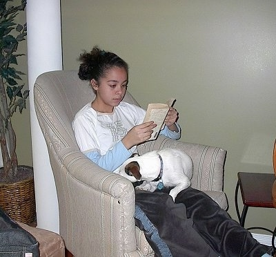 A girl is sitting in an arm chair and she is reading a book. There is a white with brown Jack Russell Terrier laying in her lap.