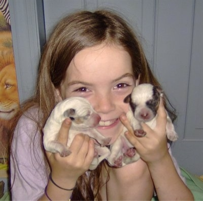 A girl in a pink shirt is holding two newborn Texas Heeler puppies in her hands.