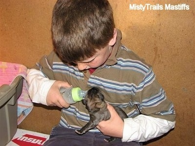 A boy feeding a puppy with a bottle
