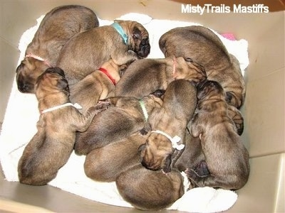 A Litter of Puppies in a box
