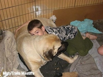 Kayden (the Boy) giving Sassy the English Mastiff a hug