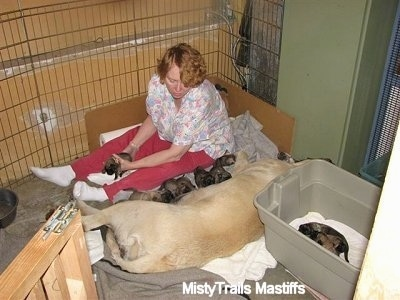 lady sitting in the corner next to the puppies nursing