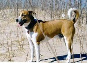 Cunucu Dog Rescue