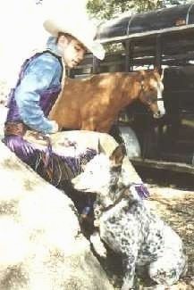 The left side of an Australian Cattle Dog that is sitting and looking at a large rock, that has a cowboy sitting on that rock and a horse tied to a trailer behind them.