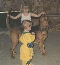 A Girl is posing a bloodhound in front of a little boy