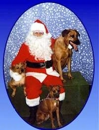 A Santa Claus is sitting on a table and there are three dogs around it.