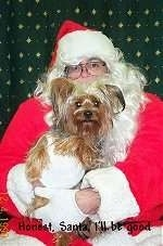 A brown with black Yorkshire Terrier is sitting in the arms of a Santa Claus that is hugging it.