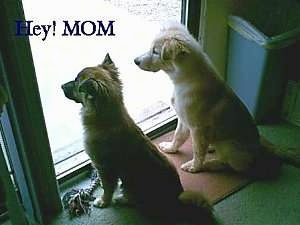 Two Puppies are sitting in front of a sliding door. The words - Hey! MOM - are overlayed in the top left corner