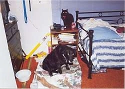 Acey the dog sitting near a bed with its head down and a cat behind him