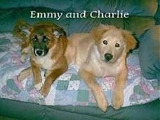 Two medium-haired dogs on a couch on top of a pastel colored quilt - A brown with black and white and a tan Shepherd/Chow mix.