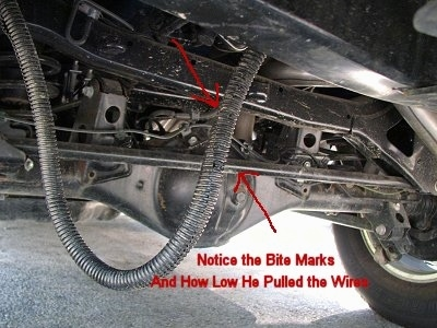 Arrows pointing to a wire under a vehicle with the words 'Notice the Bite Marks and How Low he Pulled the Wires' overlayed