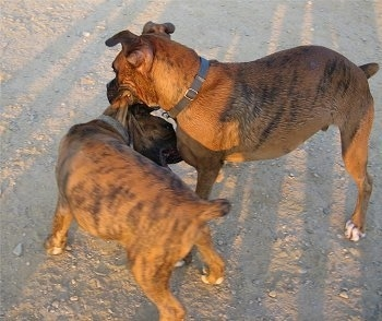 It's a Boxer Thing... :)