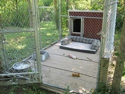 Inside of a Dog Kennel