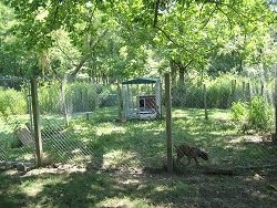 Yard attached to the dog kennel