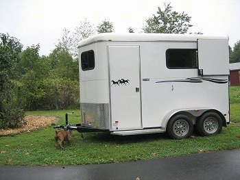 Bruno the Boxer Puppy is in front of the Horse trailer