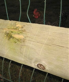 A wood fence with a chewed mark on it