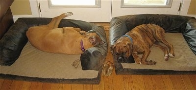 Allie and Bruno the Boxers sleeping in there respective dog beds