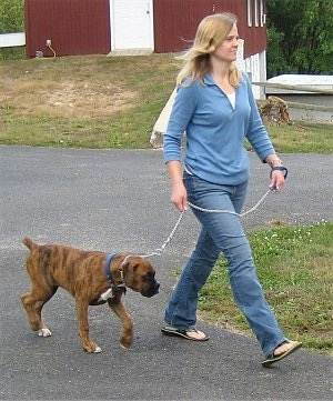 Woman holding a leash to short length with well-trained dog