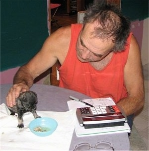 Puppy eating a bowl of dry food on a table with a man at the table with a calculator, pen, paper and glasses on the table