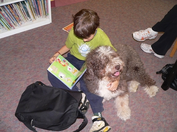 Top down view of a thick coated, grey and white Spanish Water Dog that is laying against the side of a boy that is sitting on a carpet and reading a book. The boy has his arm around the dog.