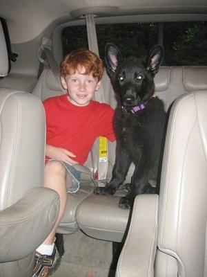 A red haired boy is sitting in the backseat of a vehicle and he has his right arm over the back of a black Shiloh Shepherd puppy that is sitting next to him.