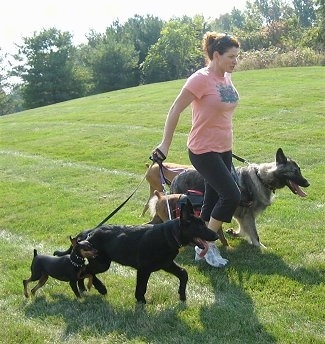 The front right side of a Lady who is leading three dogs on a walk through a field.