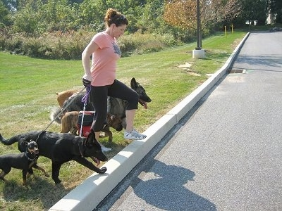 A lady wearing a pink shirt is preparing to lead five dogs across a street.