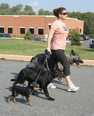 Correct way to walk your dogs - The Leader Goes First
