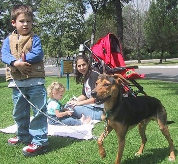 The front left side of a black and brown Xoloitzcuintli dog that is standing across grass and its left paw is in the air. There is a lady sitting with a baby on a blanket and there is a boy holding the leash of the dog.