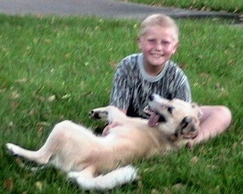 A tan with black Golden Retriever/Australian Shepherd mix breed dog is laying on and in the lap of a child who is sitting behind it in the grass. The dog's mouth is open and its tongue is hanging to the left of its mouth.