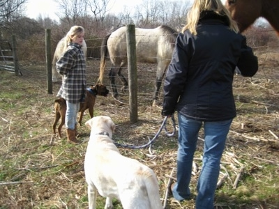 Bruno the Boxer, Henry the Labrador Retriever, Amie and Sharon standing in front of a fence with horses behind it