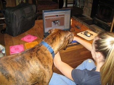 Amie working on HorsesWithAmie.com on a laptop while Bruno the Boxer watches