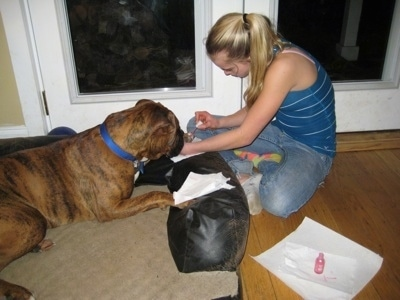 Amie painting Bruno the Boxers nails with pink polish