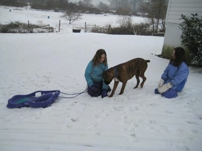 Sara and Jordan with a sled outside in the snow with Bruno the Boxer