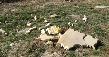 Pieces of the dismantled dog bed all over the yard