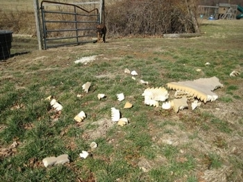 Pieces of the dismantled cat bed all over the yard