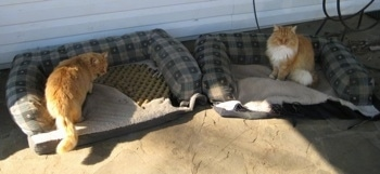 Two cats sitting in two different dismantled dog beds on the porch