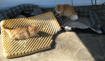 Cat laying on the cushion and one cat standing in the dismantled bed