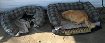 A cat standing on a dismantled dog bed on the porch