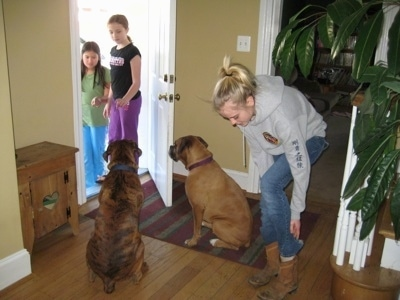Allie and Bruno the Boxer sitting in front of a door while Amie gets her boots on and Sara and Lindsey stand at the doorway
