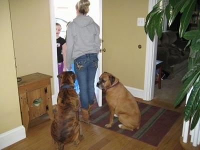 Allie and Bruno the Boxer sitting in front of a doorway behind Amie who is standing in front of them