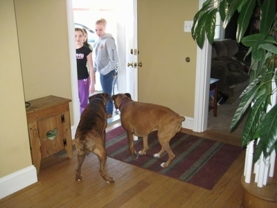 Allie and Bruno the Boxer begining to walk out the door as the kids stand outside