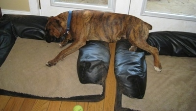 Bruno the Boxer sleeping across both of the dog beds